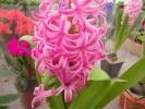 Квіти_21