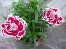 Квіти_22