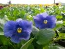 Квіти_23
