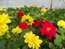 Квіти_25