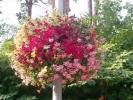 Квіти_28