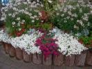 Квіти_29