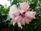 Квіти_33