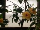 Квіти_34