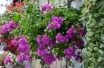 Квіти_3