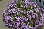 Квіти_8